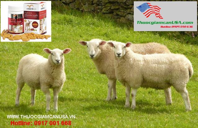 Nhau thai cừu Rebirth life tốt nhất của Úc, hàng chính hãng 100%